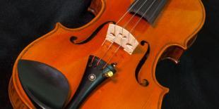Anatomy of the Violin